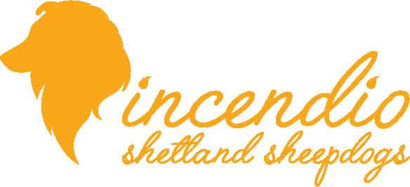 Incendio Shetland Sheepdogs